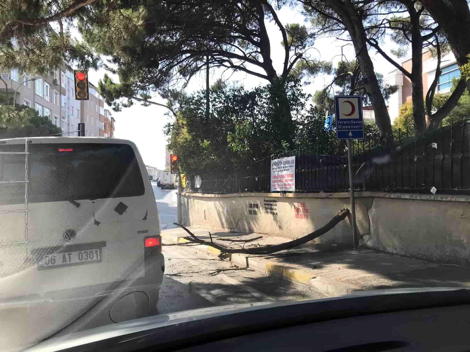 Kamyonet sürücüsü tarihi ağaca zarar verdi